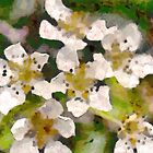 leptospermum by Vivien Highground