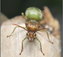 Queen Weaver Ant  by MrAj