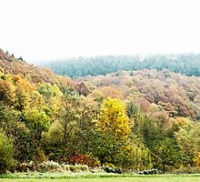 Autumnal coloured woods  by Rainer Kuehnl