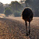 Emu Bottom, Cornishtown Road, Rutherglen, Victoria, Australia by Georgina James
