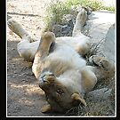 sleppy lion by sNEzaNA