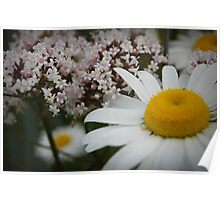 Daisies And Verbena Poster