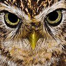 Eye Contact by Gareth Jones