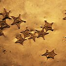 Fossil starfish at  University of Texas nature museum by Alice Kahn