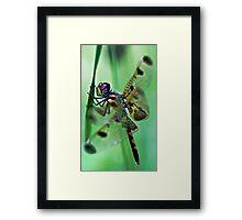 Dragonfly - At Rest Framed Print