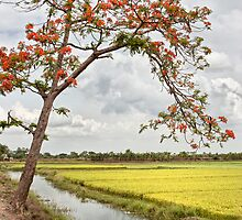 Green paddy field and Krishnachura tree at India by Soumya Mitra