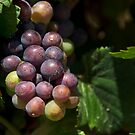 Fruit of the Vine by SusanAdey