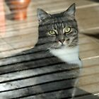 Verandah Cat by saltbushbill