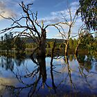 Wonga Wetlands 2 by John Vandeven