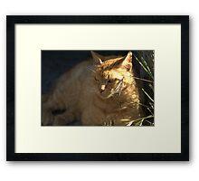 Ginger Megs Framed Print