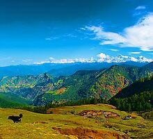 The Mother Nature at Chopta by Mukesh Srivastava