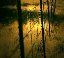 Sunlight and Barbed Wire by Mary Beal