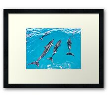 Spinner Dolphins Bow Riding Framed Print