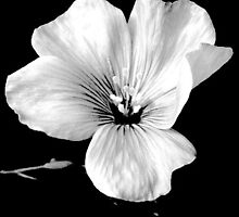 Les Premieres Fleurs by lilynoelle