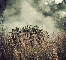 Hawaii Volcanoes National Park - Steam Vents by distracted