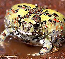 Holy Cross Toad by EnviroKey