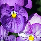 Pansies in Lavender by Corri Gryting Gutzman