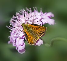 Large Skipper by inkedsandra