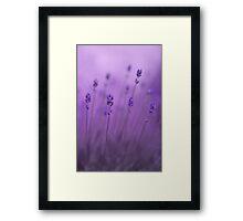 lavender colors Framed Print