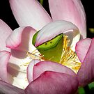 Lotus Vail by NatureGreeting Cards ©ccwri