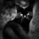 The Cat by AngelaFoster