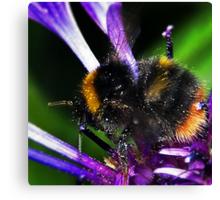 Bumble Bee Buzz Canvas Print