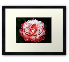 Whipped cream and strawberry sauce Framed Print