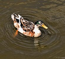 What Is This Duck? by David J Knight