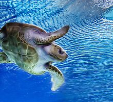 Sea Turtle by Jayme Rutherford