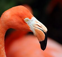 flamingo by DBArt
