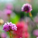 Bouquet Bokeh by duncandragon
