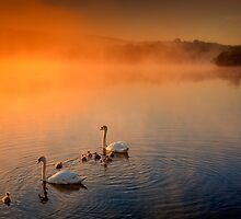 Sunny morning swim... by David Mould