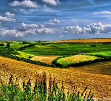 Dorset Farmland by David J Knight
