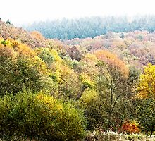 Autumnal colored woods by Rainer Kuehnl