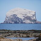 Bass Rock by emanon