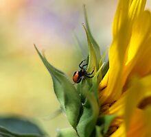 Spider on sunflower (Malta) by Ellen van Deelen
