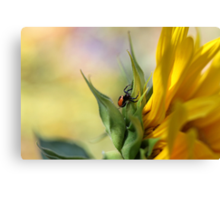 Spider on sunflower (Malta) Canvas Print