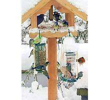 Christmas bird table 2 Photographic Print