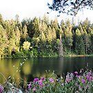 Rollins Lake  by NancyC