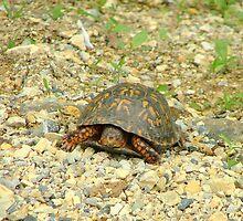 Turtle by Valeria Lee