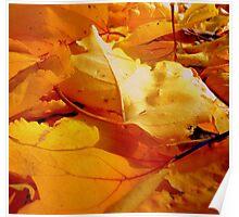 Vibrant Winter #1 Poster