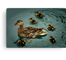 Duckling Flotilla Canvas Print
