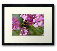 Garden bumble bee Framed Print