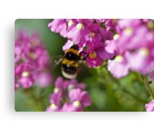 Garden bumble bee Canvas Print