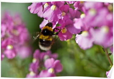 Garden bumble bee by inkedsandra