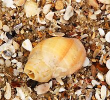 Seashells V by gcdepiazzi