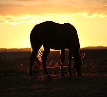 Sunset feed. by Petehamilton