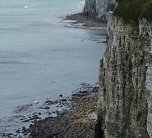 Bempton Cliffs by Sally J Hunter