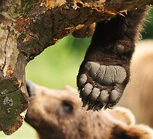 Paw & claws (bare foot) by Alan Mattison IPA