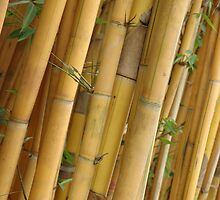 bamboo by bayu harsa